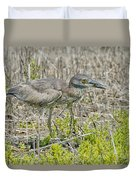 Young Yellow-crowned Night Heron Duvet Cover