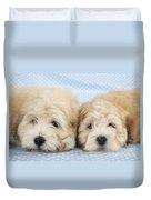 Zuchon Teddy Bear Dogs, Lying Duvet Cover