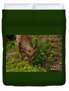 A Young Buck Grazing Duvet Cover