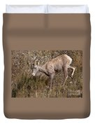 Bighorn Ewe Duvet Cover