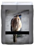 05 Falcon Duvet Cover
