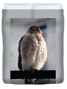 06 Falcon Duvet Cover