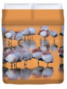 A Flock Of Migratory Flamingos Roost Duvet Cover