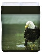 An American Bald Eagle Stares Intently Duvet Cover