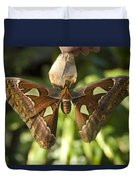 An Atlas Moth Atlas Attacus At The St Duvet Cover
