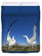 Antipodean Albatross Diomedea Duvet Cover