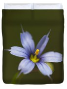 Blue-eyed Grass Wildflower - Sisyrinchium Angustifolium Duvet Cover