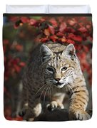 Bobcat Felis Rufus Walks Along Branch Duvet Cover by David Ponton