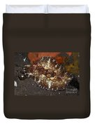 Brown And White Discodoris Nudibranch Duvet Cover