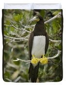 Brown Booby, Sula Leucogaster Duvet Cover
