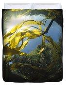 Bull Kelp Underwater Clayoquot Sound Duvet Cover
