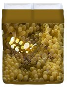 Bumblebee Shrimp On Adhesive Anemone Duvet Cover
