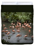 Caribbean Flamingos At The Zoo Duvet Cover