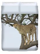 Cheetah Acinonyx Jubatus Female Duvet Cover