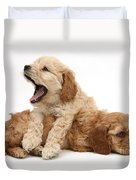 Cockerpoo Puppies Duvet Cover