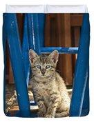 Domestic Cat Felis Catus Kitten, Germany Duvet Cover