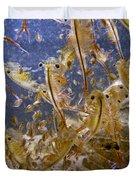 Eastern Fairy Shrimp Easterbrook Forest Duvet Cover