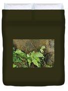 Ferns Duvet Cover