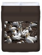 Gannet Birds Showing Fencing Behavior Duvet Cover