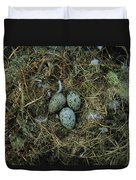 Glaucous-winged Gull Nest With Three Duvet Cover