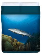 Great Barracuda, Belize Duvet Cover