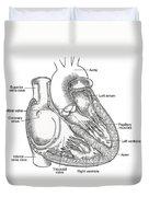Illustration Of Heart Anatomy Duvet Cover