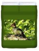 Immature Hooded Merganser Duvet Cover