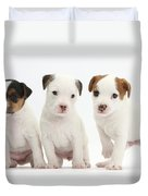 Jack Russell Puppies Duvet Cover