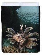 Lionfish, Indonesia Duvet Cover