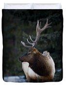 Male Elk Cervus Canadensis Duvet Cover by Richard Wear