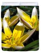 Mini Botanical Tulip Named Dasystemon Tarda Duvet Cover
