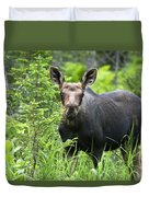 Moose. Two Month Old Moose Standing Duvet Cover