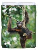 Orangutan Pongo Pygmaeus Adult Sitting Duvet Cover