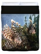 Pair Of Lionfish, Indonesia Duvet Cover