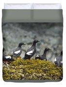 Pigeon Guillemot Cepphus Columba Group Duvet Cover
