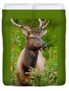 Portrait Of A Bull Elk Duvet Cover