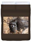 Raccoon Procyon Lotor Duvet Cover