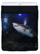 Sand Tiger Shark, Blue Zoo Aquarium Duvet Cover