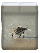 Sandpiper Hunting On Assateague Island Maryland Duvet Cover