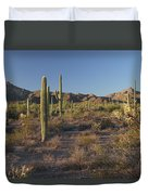 Sonoran Desert Scene With Saguaro Photograph By George Grall