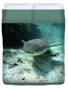 Tawny Nurse Shark Nebrius Ferrugineus Duvet Cover