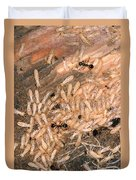 Termite Nest Reticulitermes Flavipes Duvet Cover by Ted Kinsman