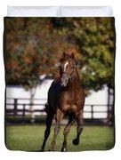 Thoroughbred Horse, Ireland Duvet Cover