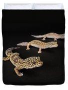 Three Female Leopard Geckos Eublepharis Duvet Cover