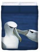 White-capped Albatross Thalassarche Duvet Cover