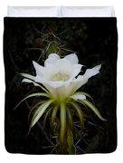 White Echinopsis Flower  Duvet Cover
