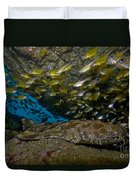 Wobbegong Shark And Cardinalfish, Byron Duvet Cover