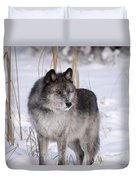 Wolf In The Snow Duvet Cover