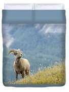 Young Bighorn Sheep, Windy Point Duvet Cover