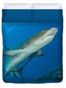 Whitetip Reef Shark, Kimbe Bay, Papua Duvet Cover